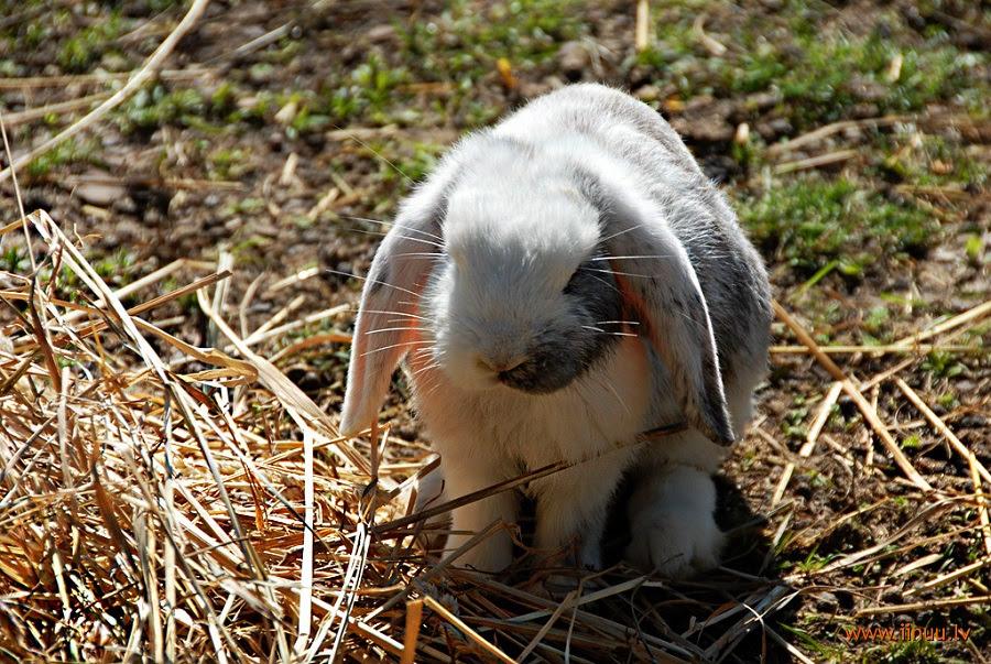 Город кроликов в Латвии. Фото