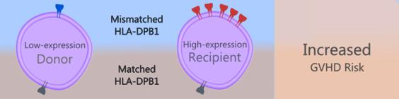 Relationship between HLA-DPB1 variants and GVHD risk