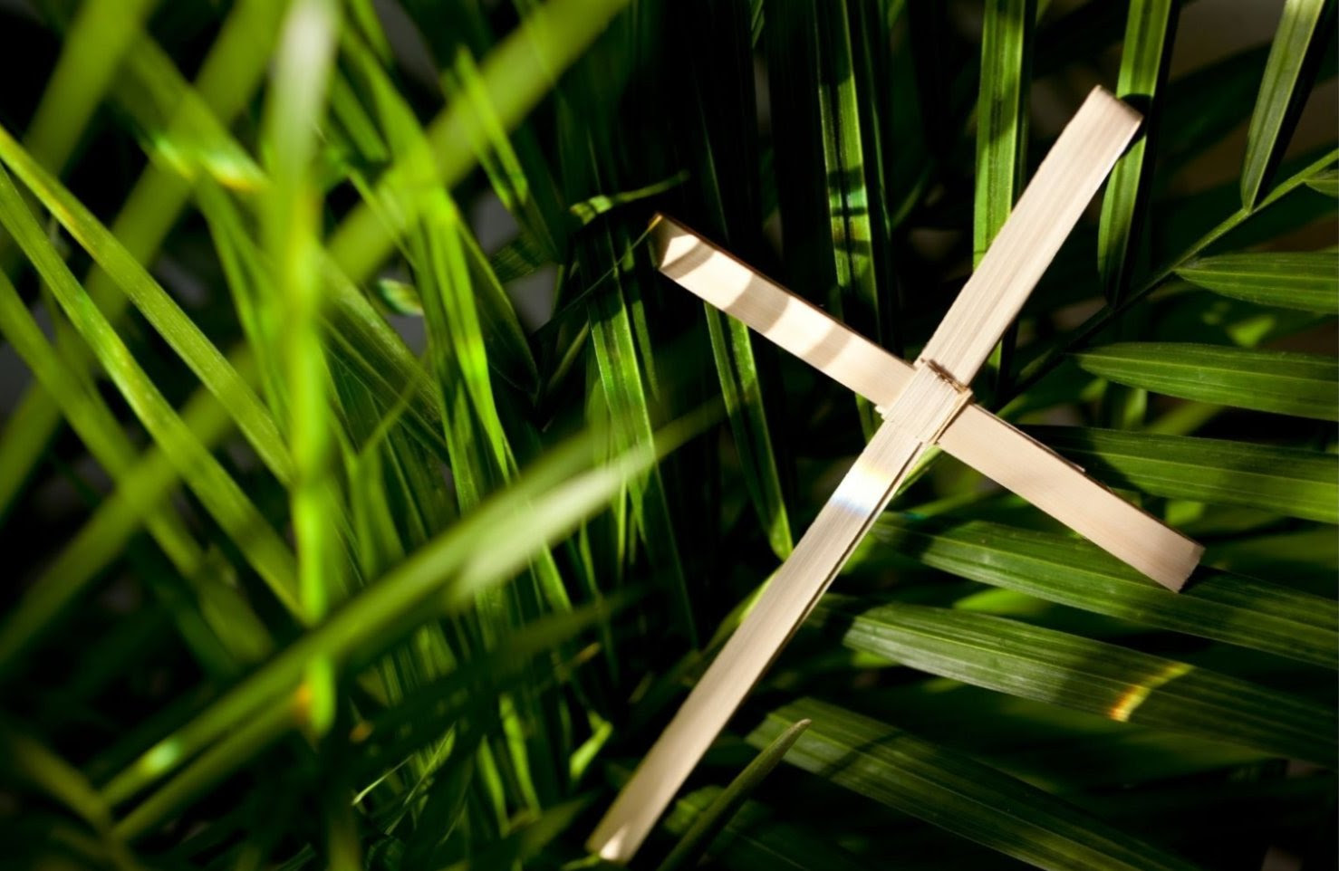 cross and palms