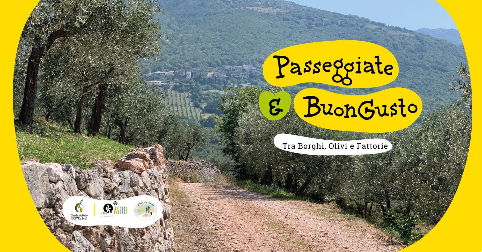Sabato 12 giugno a Torgiano (Pg),una giornata dedicata all'oleoturismo con una passeggiata a piedi e, per la prima volta, anche una passeggiata in bicicletta.