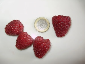 Raspberry Joan J - size comparison with 1 euro coin