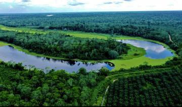 Ocho Sur: Comunidad Nativa Santa Clara de Uchunya fortalece relaciones con productor de palma