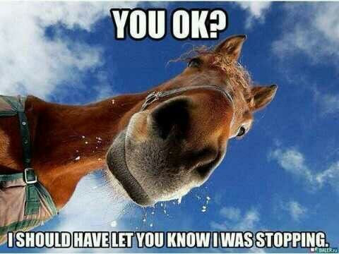 Being a                                                           horse person..                                                           this is so                                                           wrong. Haha                                                           where's the                                                           saddl