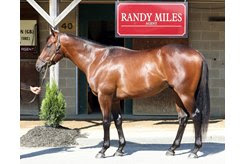 The American Pharoah colt consigned as Hip 66 at the Fasig-Tipton Midlantic Sale
