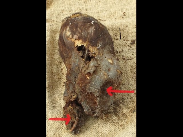 Astonishing Newborn Baby Elongated Skull Of Paracas Peru  Sddefault