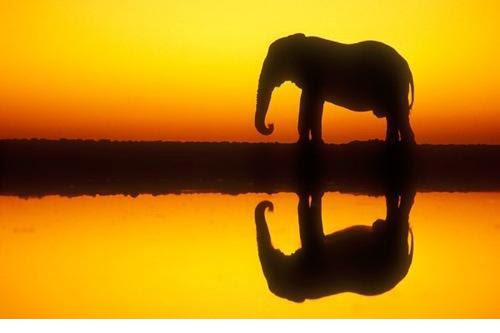 elephant at sunset 2