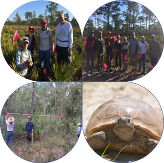 Gopher Tortoise Surveys