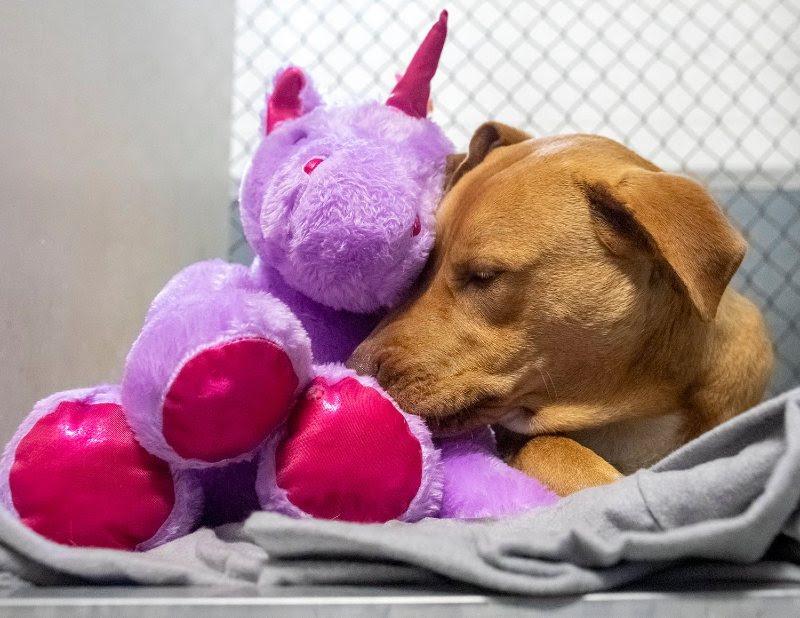 A stray dog cuddling a stuffed unicorn