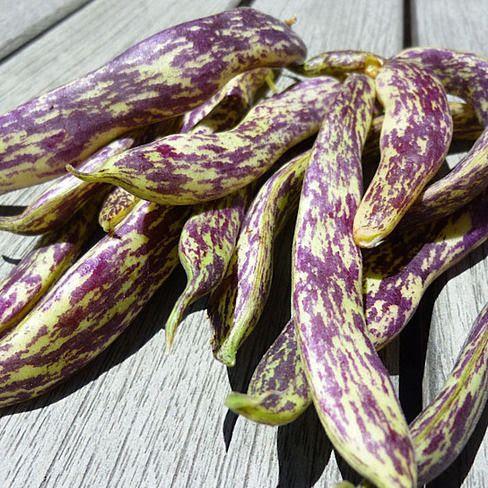 Dragon Langerie bean