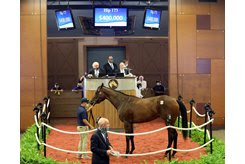 The Upstart filly consigned as Hip 173 in the ring at the Fasig-Tipton Midlantic Sale