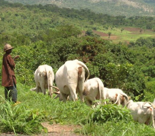 You don?t stop people?s means of living and expect peace to reign ? Fulani group warns Southern governors against banning open grazing