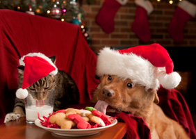Amazing Christmas Gifts for Pets You Need to See  (Videos)