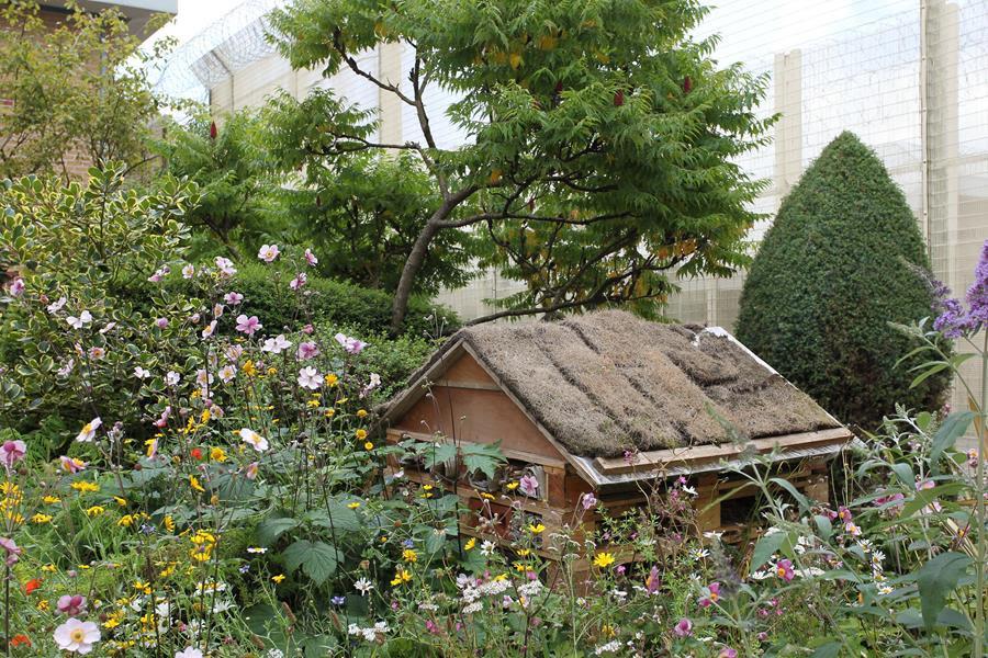 Hull prison garden