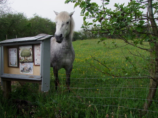 2014_05_landmatters_-_accueil_poney_dartmoor_et_panneaux