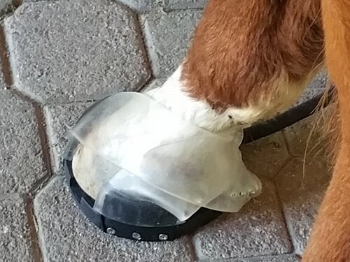 Hoof Pro Binding attached