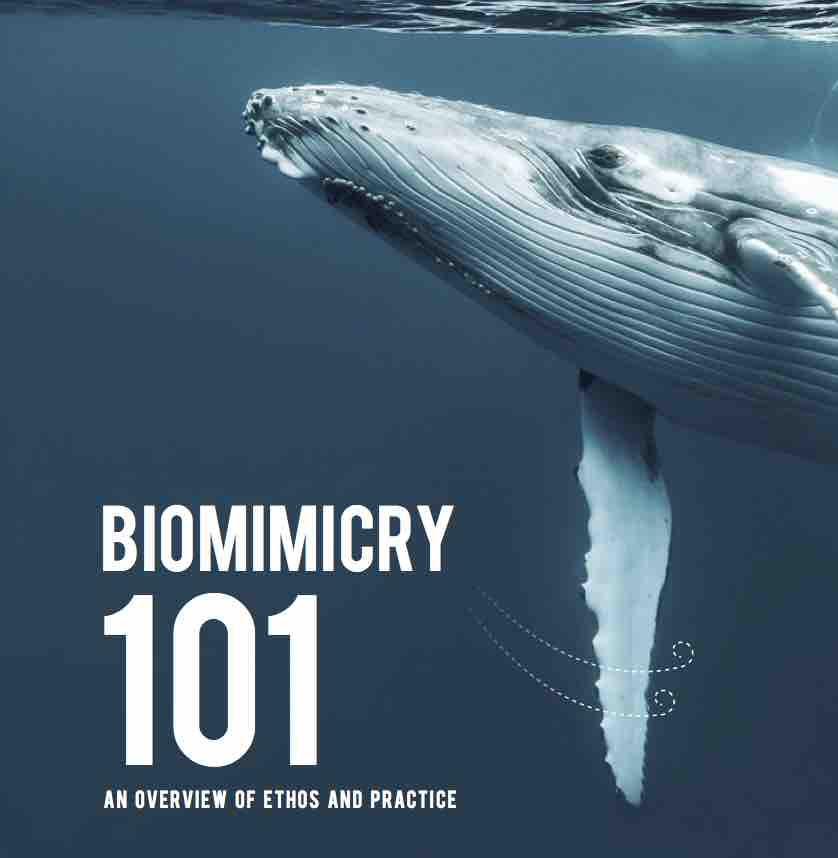 Biomimicry101.jpg