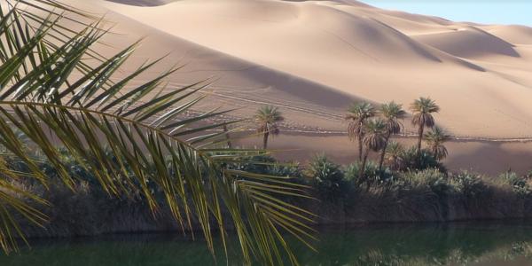 le palmier dans spiritualité a39e3097-e6ac-4b1d-b3e4-491d264a0ec0