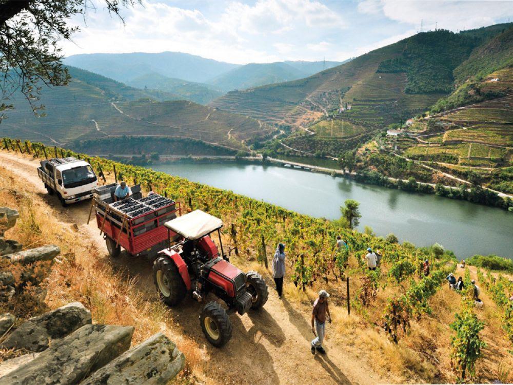 La vallée du Douro, près de Covelinhas, à une centaine de kilomètres de Porto.