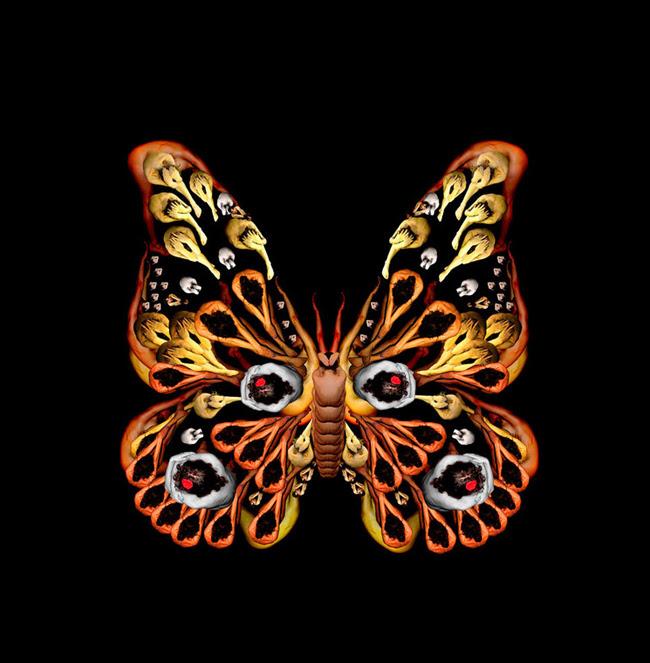 Những đôi mắt cú ẩn dưới hoạt tiết cánh bướm
