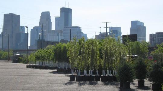 City tree lottery