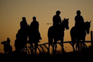 Horses head to the track during morning training at Woodbine