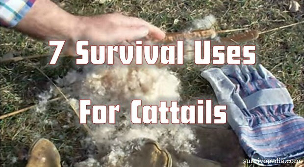 7 Survival Uses for Cattails (Videos)
