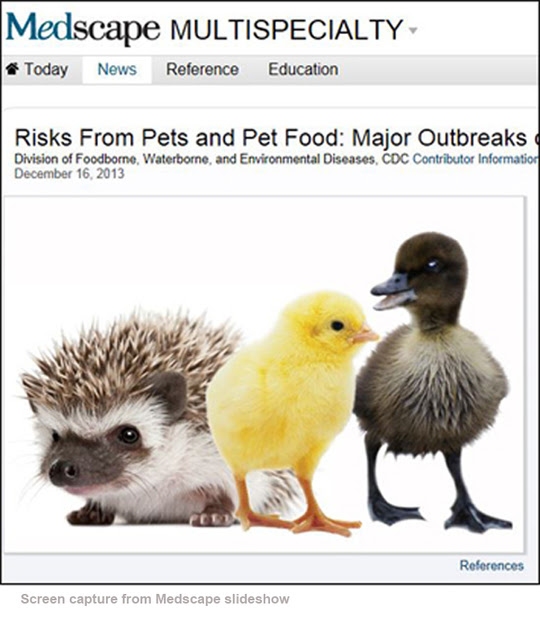 "Screen capture from Medscape slideshow, ""Risks from Pets and Pet Food,"" depicting baby hedgehog, chick, and duckling"
