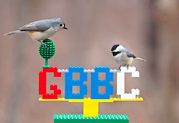 birds investigating Lego sculpture, by Gary Mueller