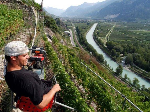 Le canton du Valais contribue au financement de la sauvegarde du vignoble en terrasses de Sion © Keystone