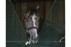 Tacitus was elevated to third in the May 4 Kentucky Derby at Churchill Downs