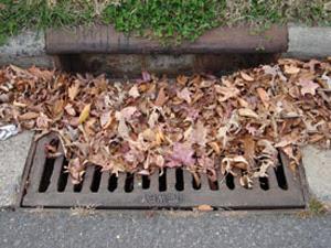 storm_drain-leaves.jpg