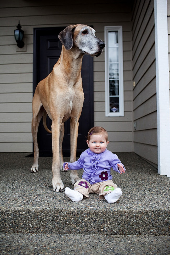 http://s.fishki.net/upload/post/201412/02/1339454/7172060-r3l8t8d-650-cute-big-dogs-and-babies-35.jpg