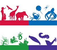Illustrated red silhouettes of a woman, young girl, eagle, giraffe, and elephant. Blue silhouettes of a king crab, horseshoe crab, spider, and squid. Green silhouettes of various sea worms. Purple silhouettes of a duck leech, bristle worm, and peanut worm.