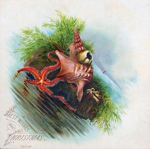 Tấp thiệp Giáng sinh này dường như được gửi đến từ đáy đại dương.
