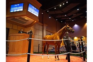 Blue Prize in the ring at The November Sale