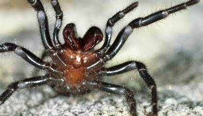 Australia Rains Bring Relief From Fires—and a Surge in Deadly Spiders image