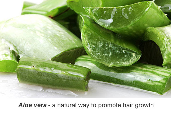 Aloe vera for promoting hair growth