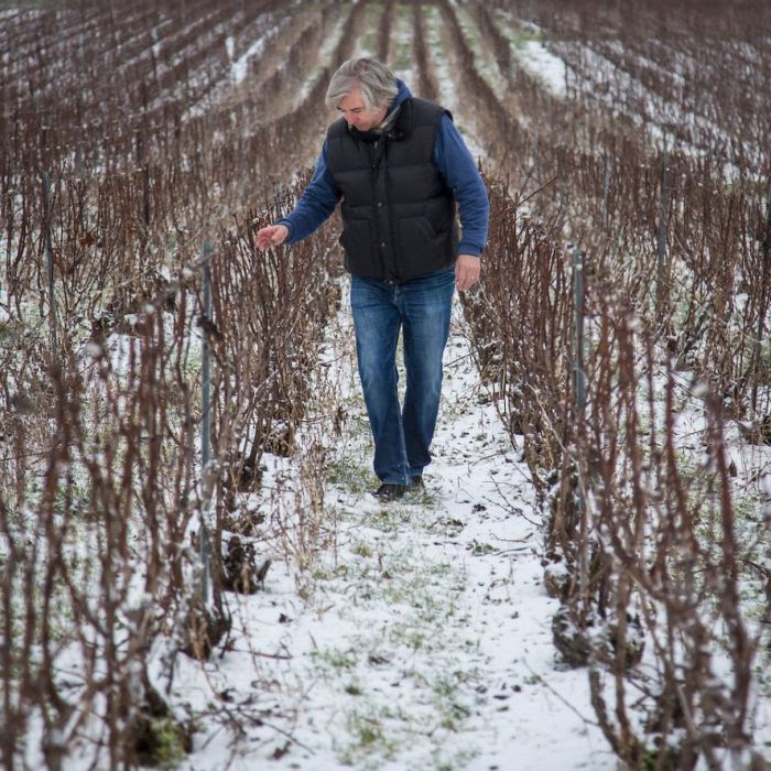 Winemaker checking the vines in winter