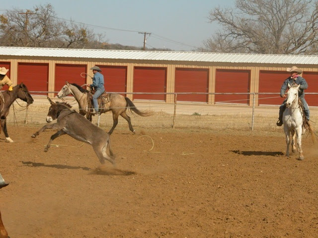 Donky roping