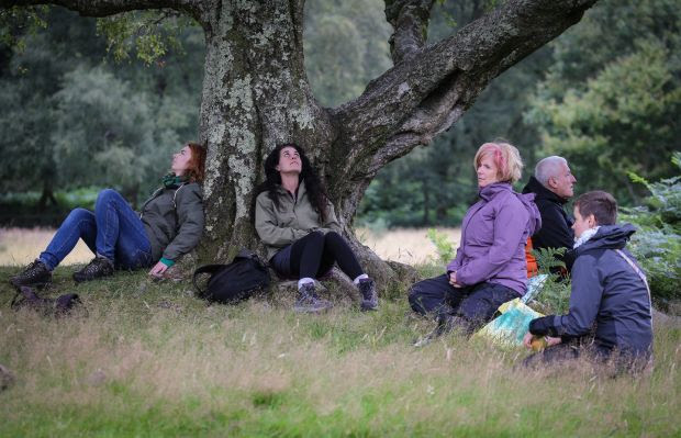 Connecting with nature: Forest bathing training courses now take place in Glendalough forest, Co Wicklow. Photograph: Crispin Rodwell