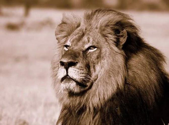 Cecil de leeuw