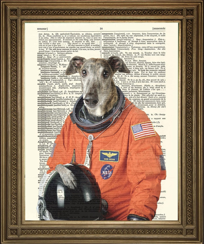 Image result for greyhound astronaut