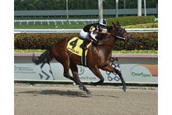 Lady's Island wins the Sugar Swirl Stakes at Gulfstream Park