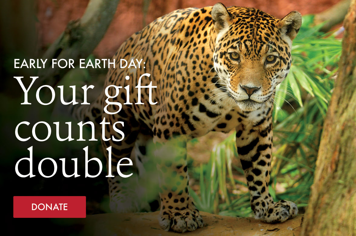Earth Day Hero Image with Jaguar