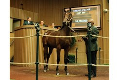 A War Front filly consigned as Hip 389 in the ring at the Keeneland September Yearling Sale