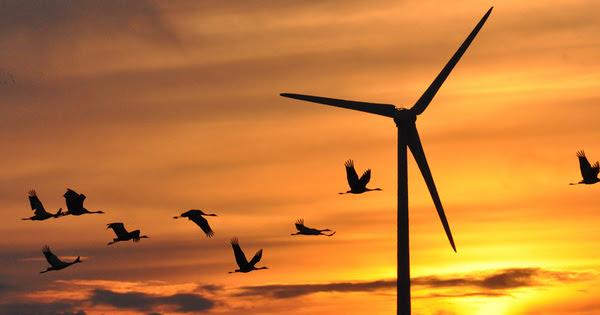 Éolien: planifier pour réduire, voire inverser, les impacts sur la biodiversité
