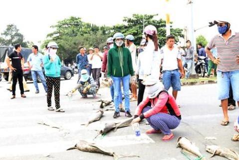 Người dân mang xác cá chết đổ ra quốc lộ, đường đi Vũng Tàu tắc nghẽn - ảnh 7