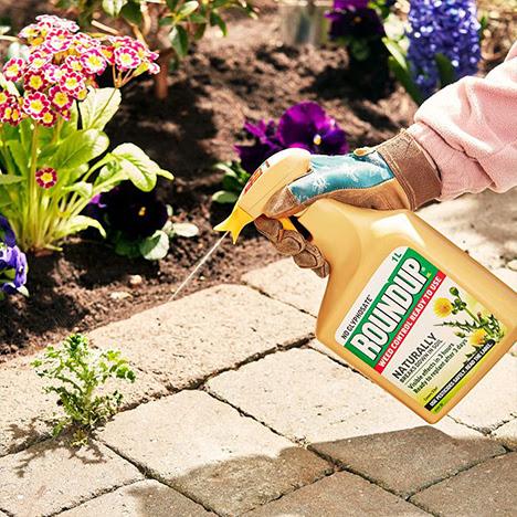 Evergreen garden care sized.jpg