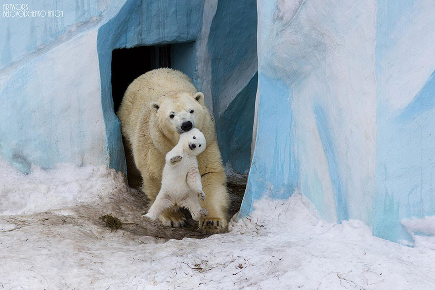 http://www.boredpanda.com/cute-animal-parenting/?image_id=animal-parents-3-1.jpg