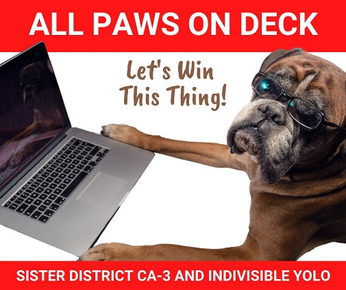 A dog poses as if it's using a laptop. Text: All paws on deck- let's win this thing! Sister District CA-3 and Indivisible Yolo.